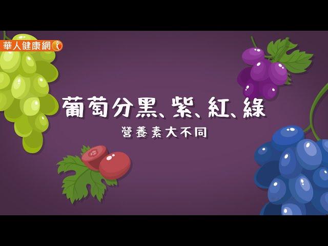 【影音版】葡萄分黑、紫、紅、綠,營養素大不同
