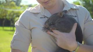 Wombat Joey Arrives at Australia Zoo