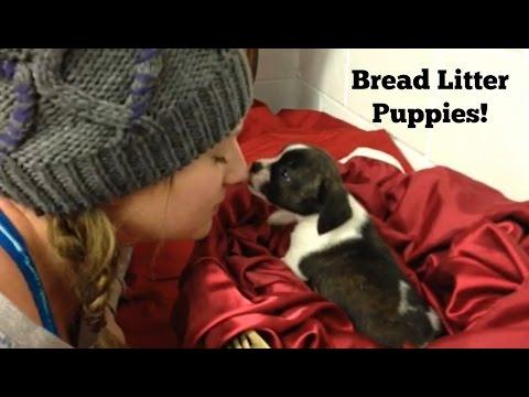 Bread litter