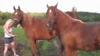Between two horses mating [New]