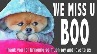 BOO: World's cutest dog dies at 12 of heartbreak 💔 (Heart Breaking News)