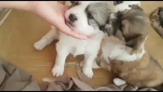 The Mon Smarty Dogs | Funny Dog Video Compilation 2018 -1