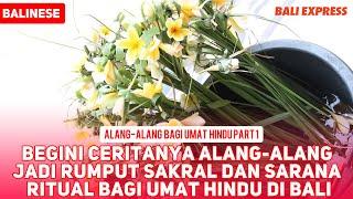 Cerita Alang-alang Jadi Rumput Sakral dan Sarana Ritual bagi Umat Hindu di Bali