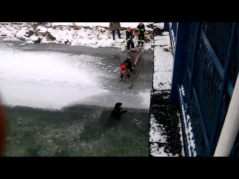 Пожарникари од Полска спасуваат смрзнато куче од заледена река