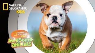 Dog Genius | Awesome Animals