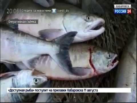 Деятельность Амурской бассейновой природоохранной прокуратуры