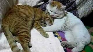 かご猫48