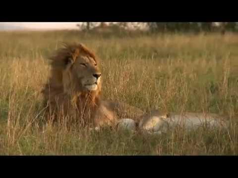 Mara Naboisho Film for CGI 2012 Directed by Ole Bernt Frøshaug 90 sec CGI .m4v