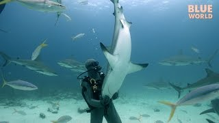 Shark Tonic Immobility   JONATHAN BIRD'S BLUE WORLD