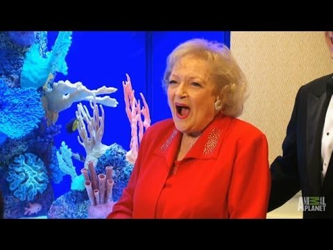 Betty White's Morris Animal Foundation Tank   Tanked - Smashpipe Entertainment