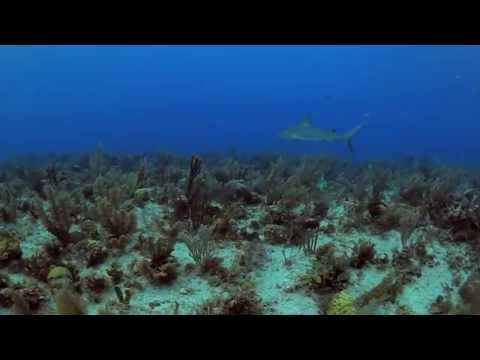 Conserving Cuba's Coral Reefs