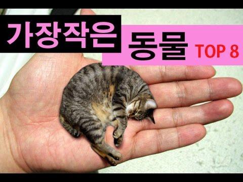 (랭킹박스) 세계에서 가장 작은 동물 TOP 8