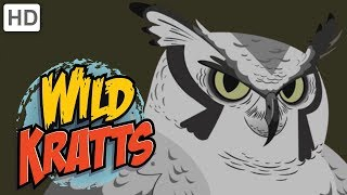 Wild Kratts - Feathered Friends