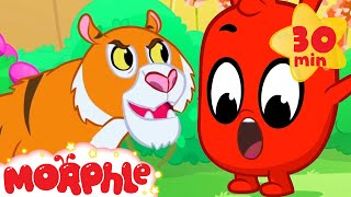 The Animals Get Mad - My Magic Pet Morphle | Cartoons For Kids | Morphle TV | Mila and Morphle
