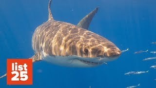 25 CRAZY Shark Facts You Can Sink Your Teeth Into - Happy Shark Week!