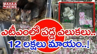 Rats Eat Away 12 lakhs Currency Notes in ATM at Assam..
