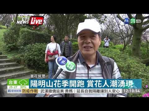 陽明山花季開跑 賞花人潮湧現   華視新聞 20200215