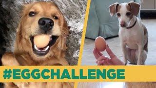 My Dog Mastered The Egg Challenge