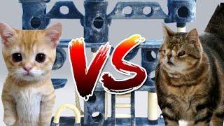 $1 CAT VS $100 CAT!