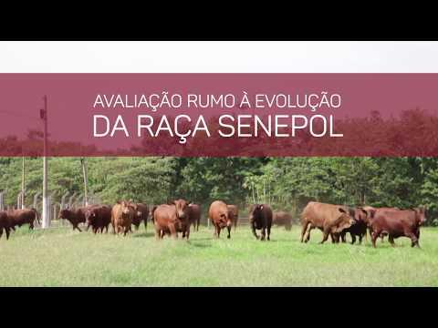 VT Leilão PROVADOS CP  2017