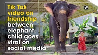 Tik Tok video on friendship between elephant, child goes v..