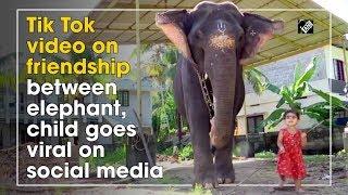 Tik Tok video on friendship between elephant, child goes v..