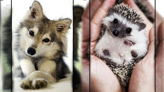 /cutest animals in the world 1 super cute pets bring warmth